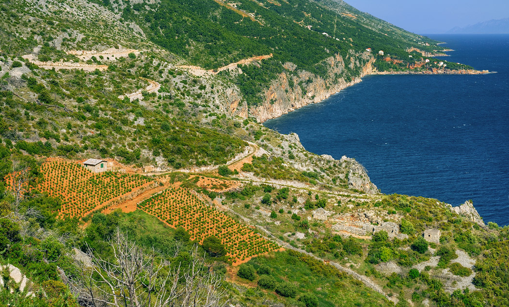 Island Hvar vineyards